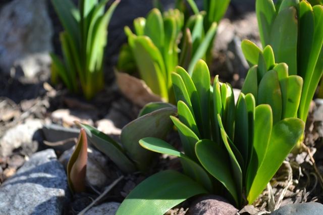 spring 2012 018
